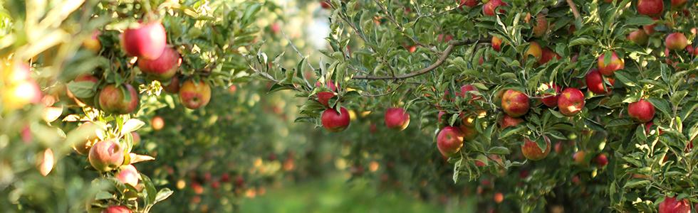 Die besten Apfel-Rezepte