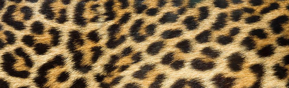 Leo-Prints stilsicher tragen